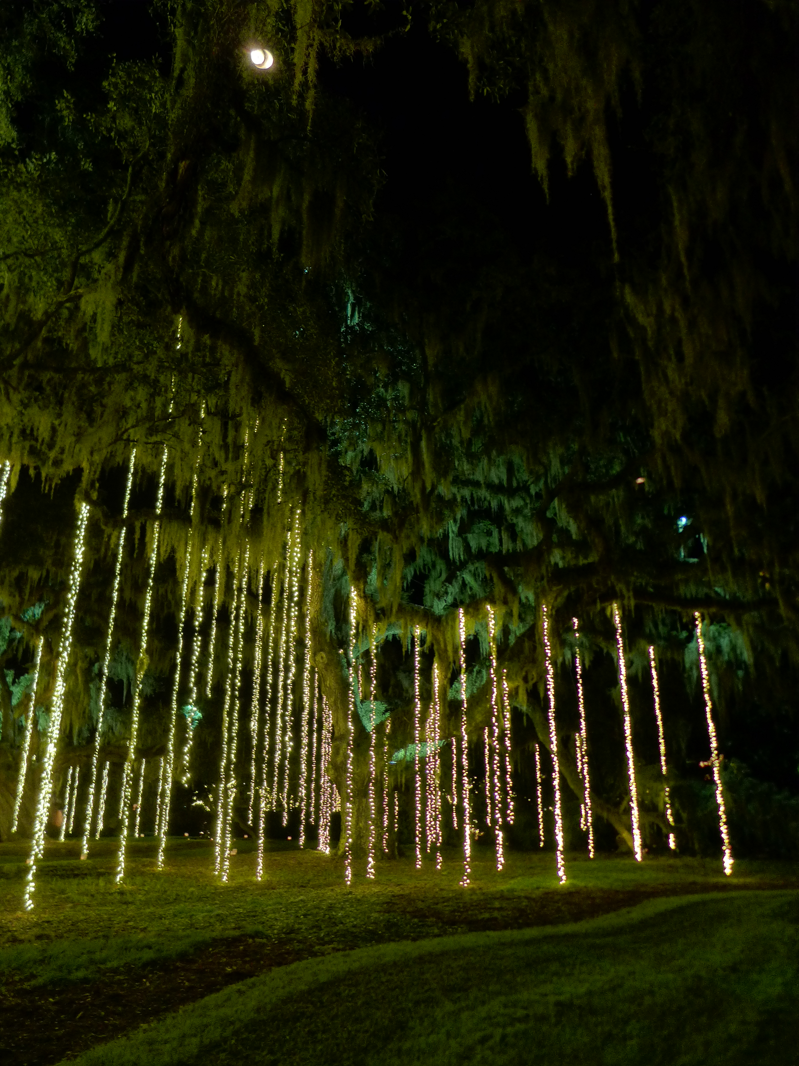 Brookgreen Gardens Comes To Life During Nights Of A Thousand Can